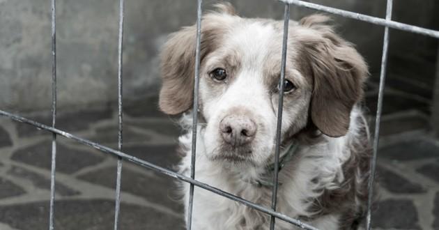 chien cage SPA