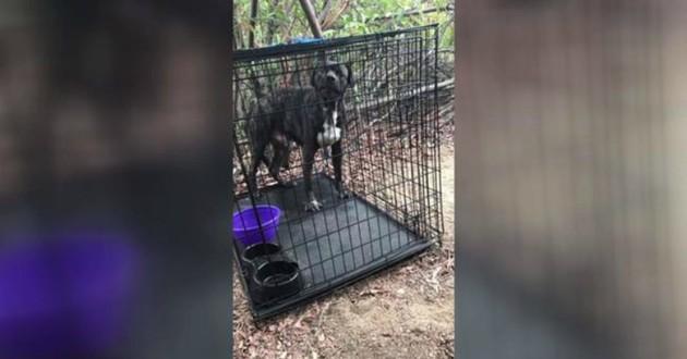 chien mastiff cage