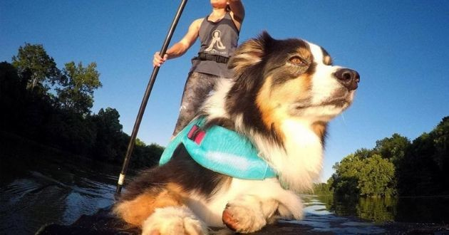 chien cani paddle