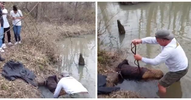chien boue rivière