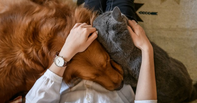 chien chat calin