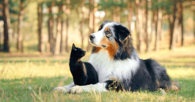 Chien allongé dans l'herbe avec un chaton entre les pattes qui le regarde