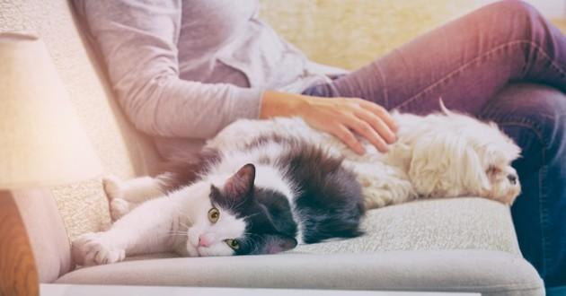 Chien et chat sur le canapé