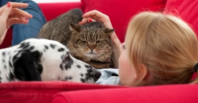 émission chien et chat