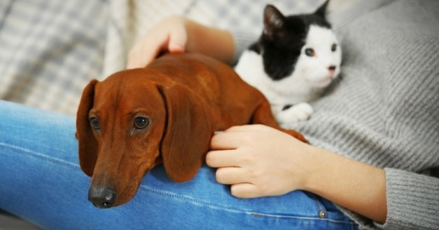 chien chat relation homme animal