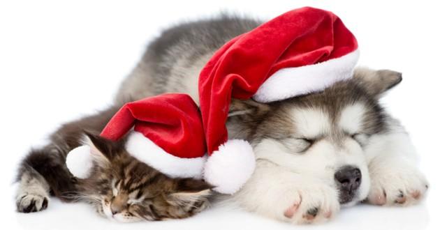 chien chat cadeaux noel