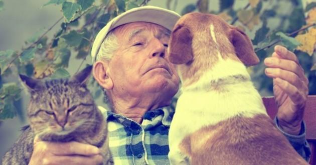 chien chat animal préféré des français