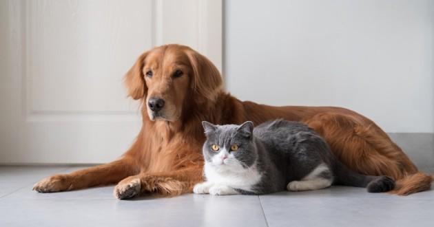 chien et chat assis à côté
