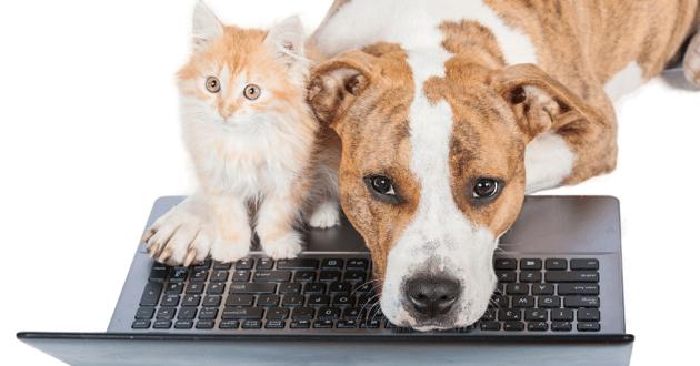 Chien et chaton sur un ordinateur