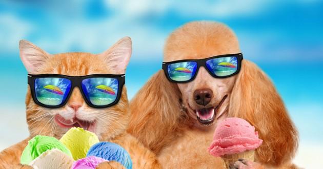 chien chat vacances été