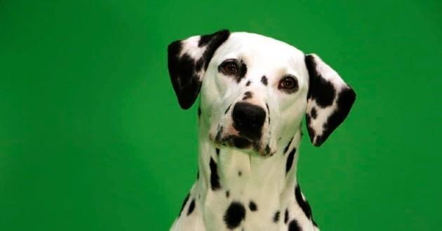 chien cinéma écran vert