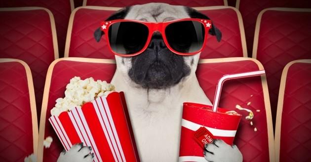 chien cinéma