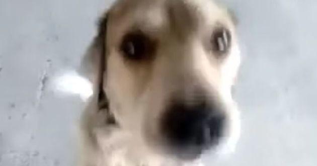 chien perdu et retrouvé