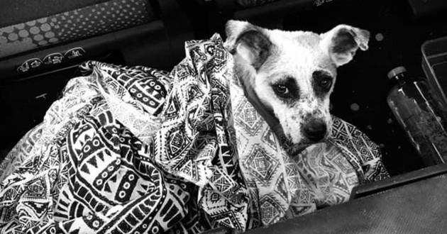 chien coffre voiture