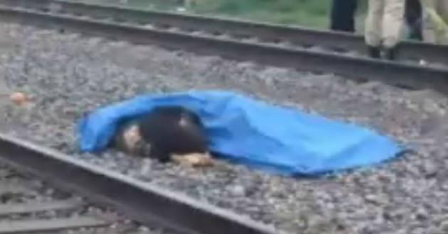 Un chien refuse de quitter son maître happé par un train