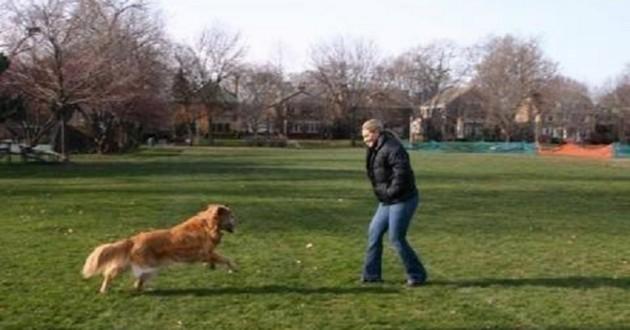 chien dans un parc