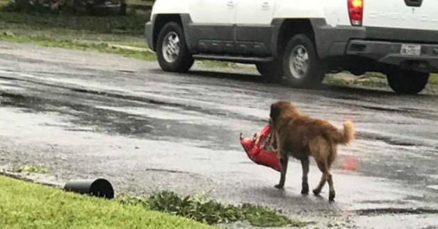 chien tempete croquettes