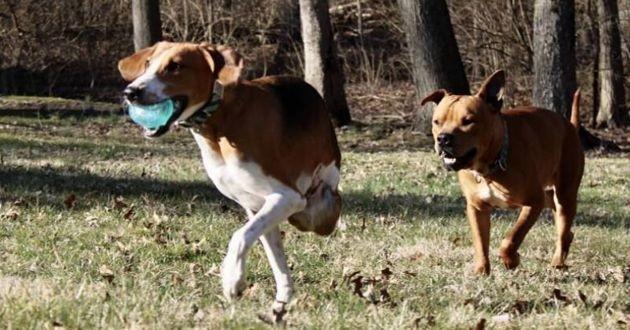 un chien à deux pattes qui court
