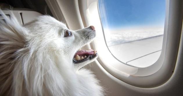 chien dans l'avion