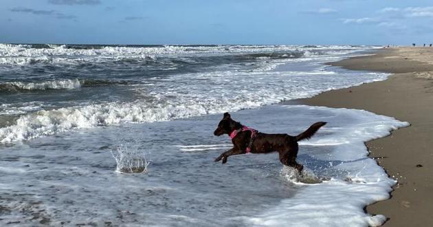 chien dans l'eau