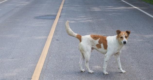 chienne dans la rue