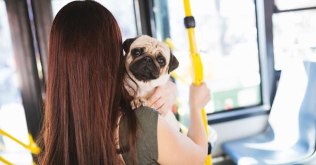 chien dans le bus