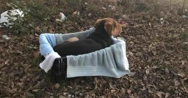 chien abandonné foret