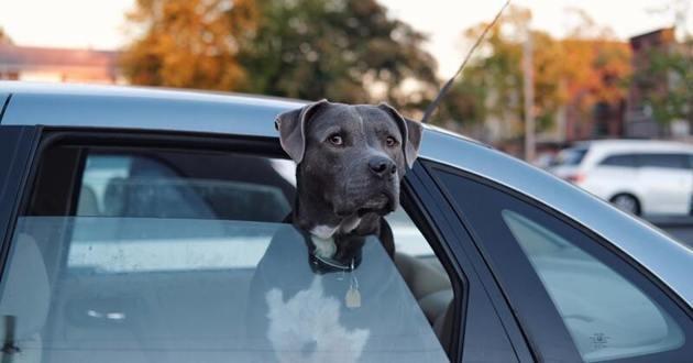 chien dans un van
