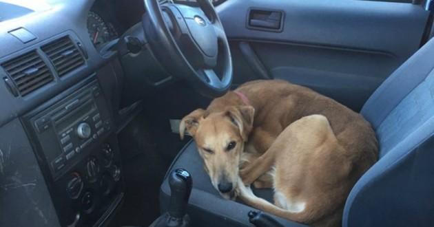 chien installé dans une voiture