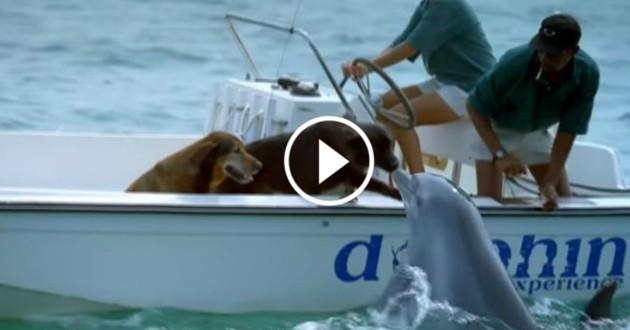 chien bisous dauphin
