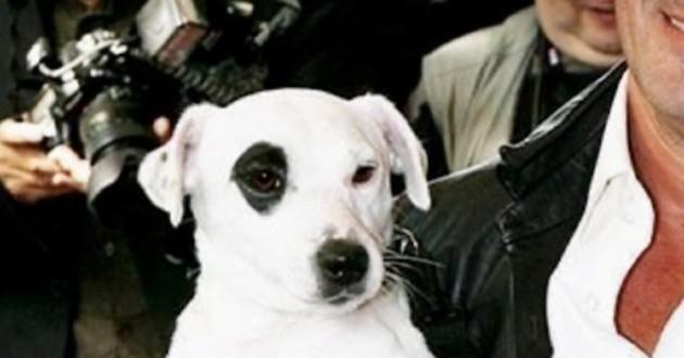 chien de christophe dechavanne