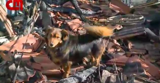 chien décombres