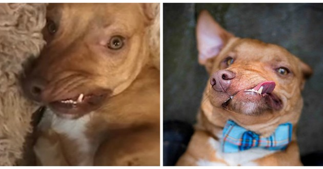 chien déformé picasso