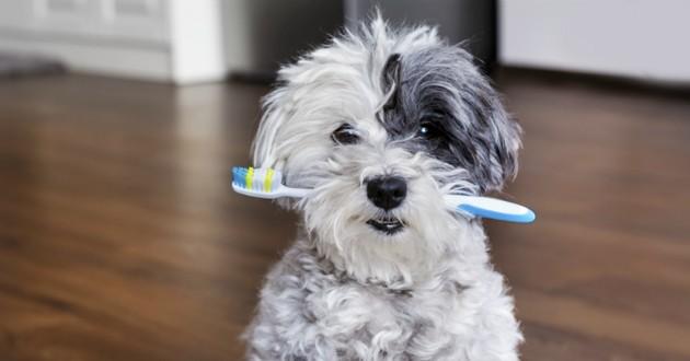 chien hygiène dentaire soins dentaires