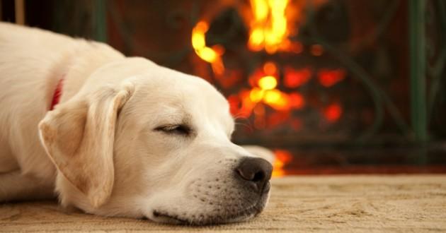 chien près de la cheminée