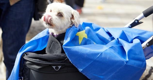 un chien et le drapeau européen