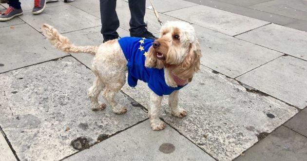 chien portant le drapeau de l'union europeenne