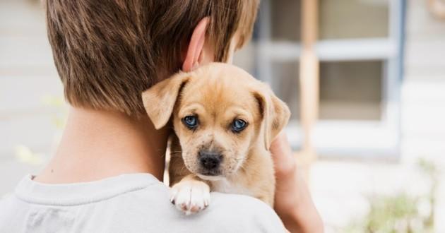 chien sur les épaules d'un garçon