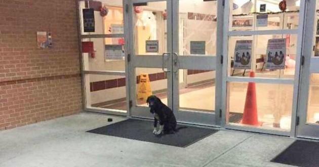 chien école