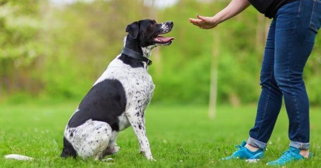 renforcement positif pour éduquer un chien
