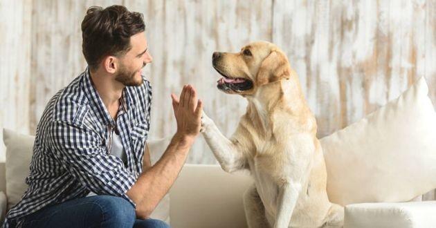 chien hiver santé alimentation compléments alimentaires