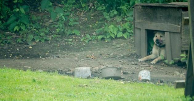 chien enchainé jardin