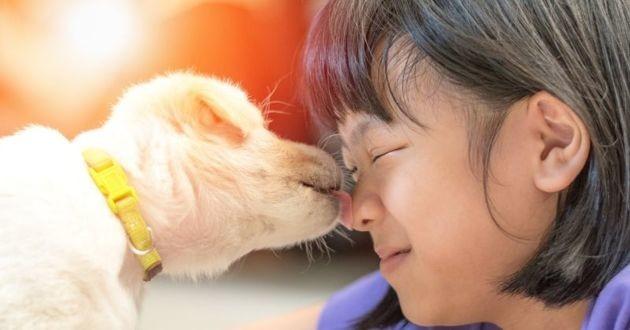zoonose chien chat maladies transmissibles à l'Humain