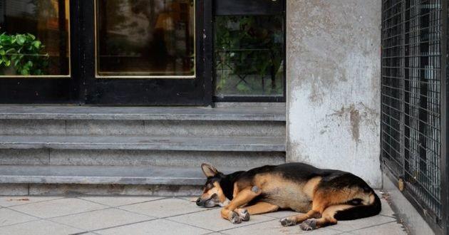 chien errant devant un immeuble