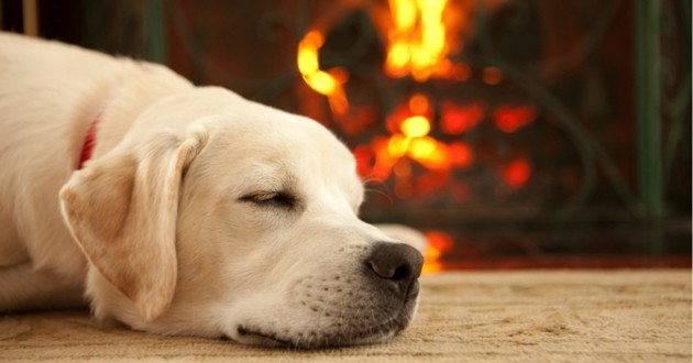 chien feu de cheminée