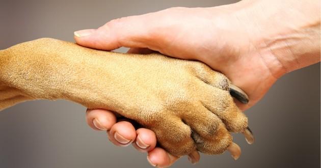 chien et maitre