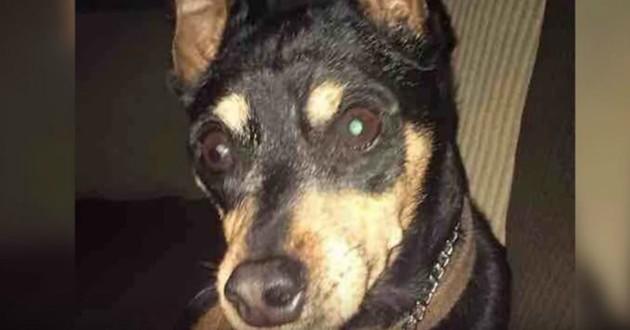 chien euthanasié