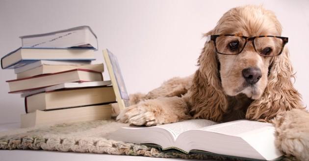 chien intelligent