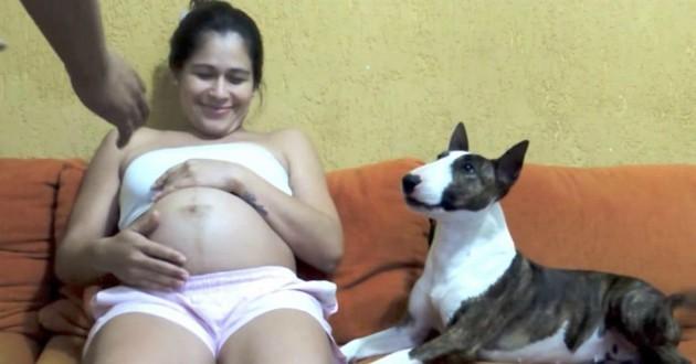 chien femme enceinte