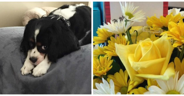 chien cavalier king charles fleurs